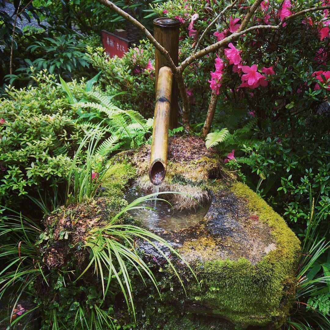 大原三千院の青々とした手水鉢 #japan #kyoto #ohara #sanzenin #temple #water #bamboo #moss #flower #京都 #大原三千院 #手水鉢 #竹 #苔 #青 #写真 #旅行 #寺院