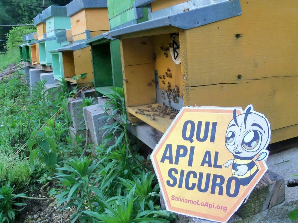 Per proteggere le api abbiamo bisogno dell'aiuto di tante persone come te. Entra in azione su www.SalviamoLeApi.org #SOSapi