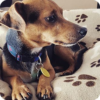 Pin By Jo Wiest On Rescue Dogs Dachshund Dachshund Mix Dogs