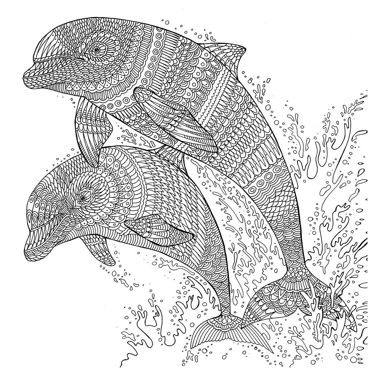 The Aquarium Colouring Book Dolphins
