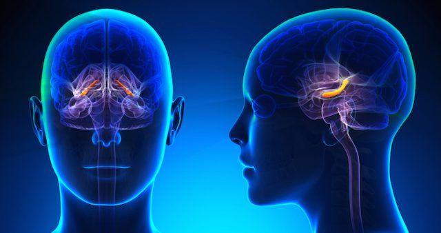 Investigadores demuestran que el hipocampo mapea más que lugares ...