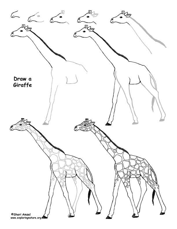 Http Www Exploringnature Org Graphics Drawing Giraffe Drawing72