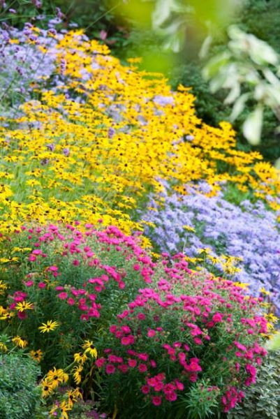 Garden ideas, Border ideas, Plant Combinations, Flowerbeds Ideas, Summer Borders, Fall borders, Asters, New England Aster, Aster monch, Aste...