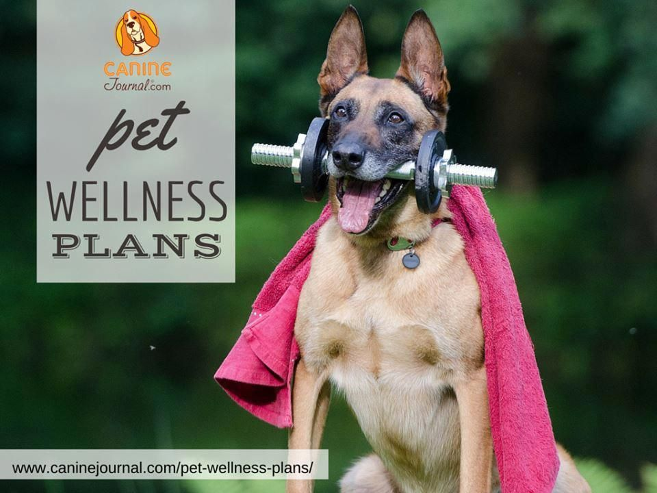 Healthy Pet Pantry Doghealthinsurance Pet Insurance Costs Pet Health Insurance Pet Insurance Cost Wellness Plan