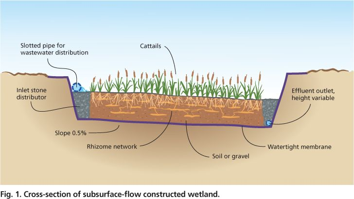 Cross Section Of Subsurface Flow Constructed Wetland