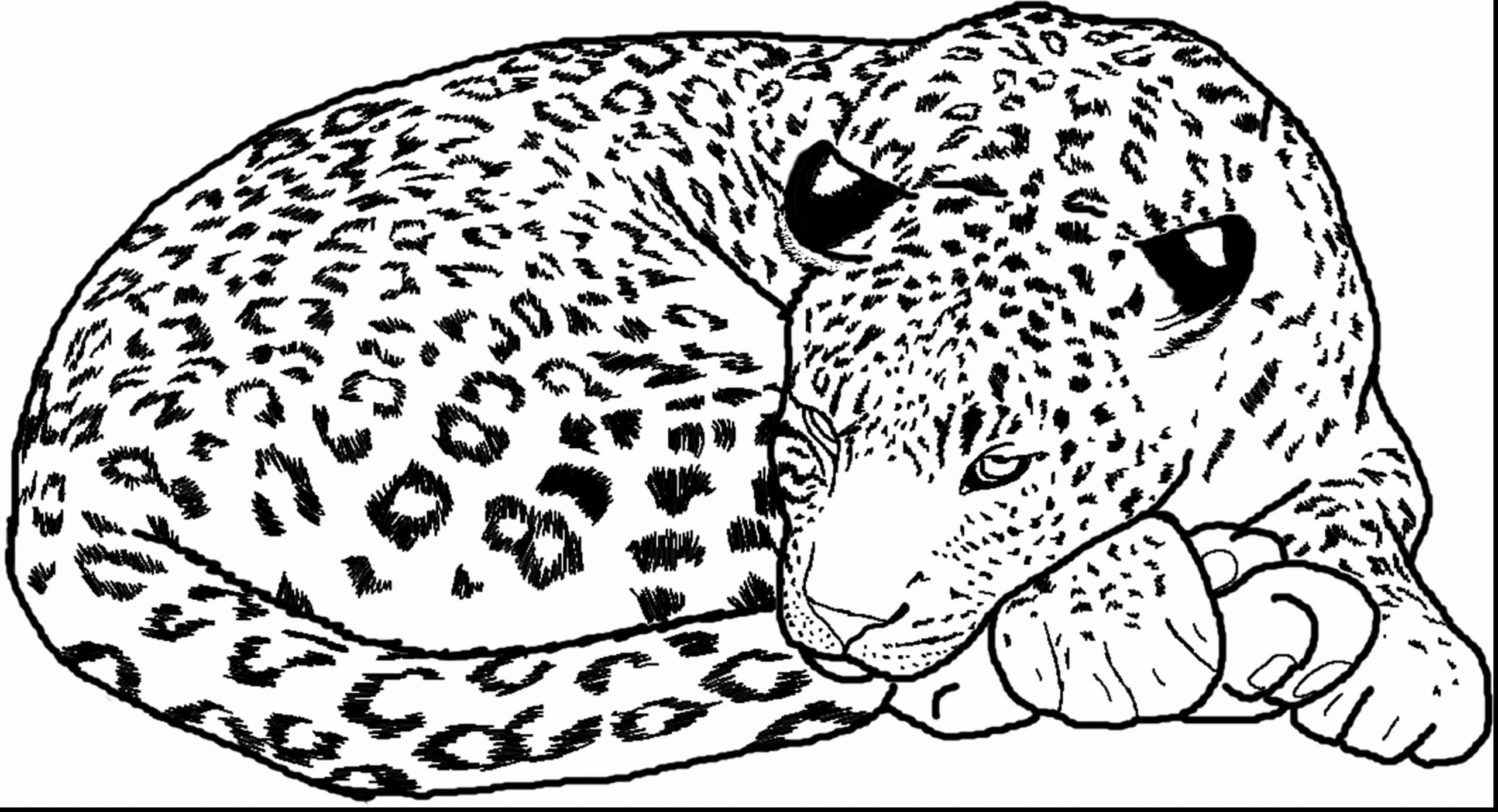 Marine Animal Coloring Pages Elegant Baby Cheetah Coloring Pages In 2020