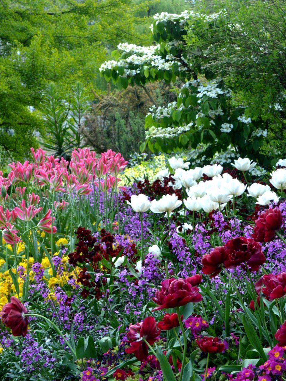 Blooming Garden Garden Flowers Bloom