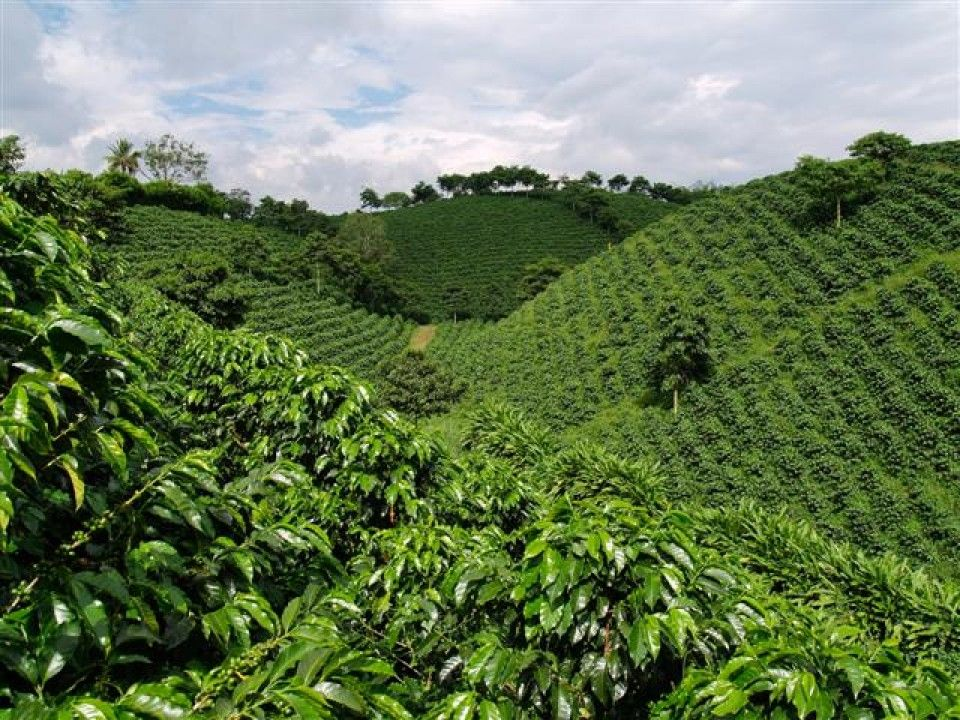 40++ Where is coffee grown in colombia inspirations