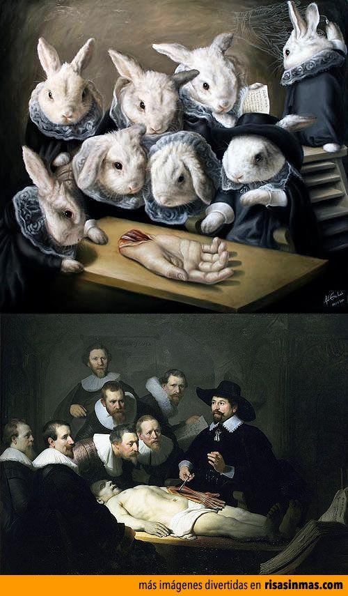 Lección de anatomía de conejos.   Humor e imágenes divertidas ...