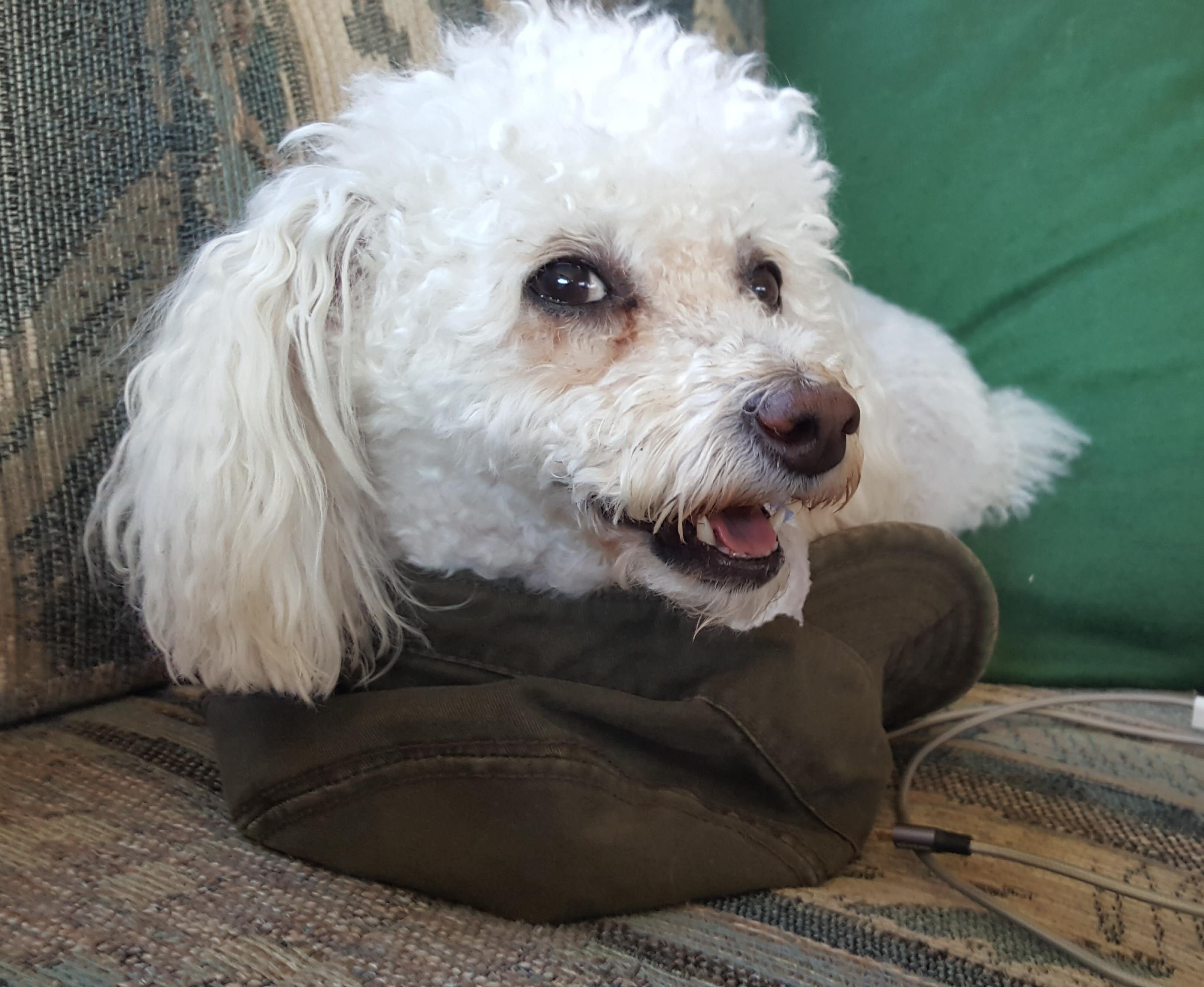Dog? Not dog hat.