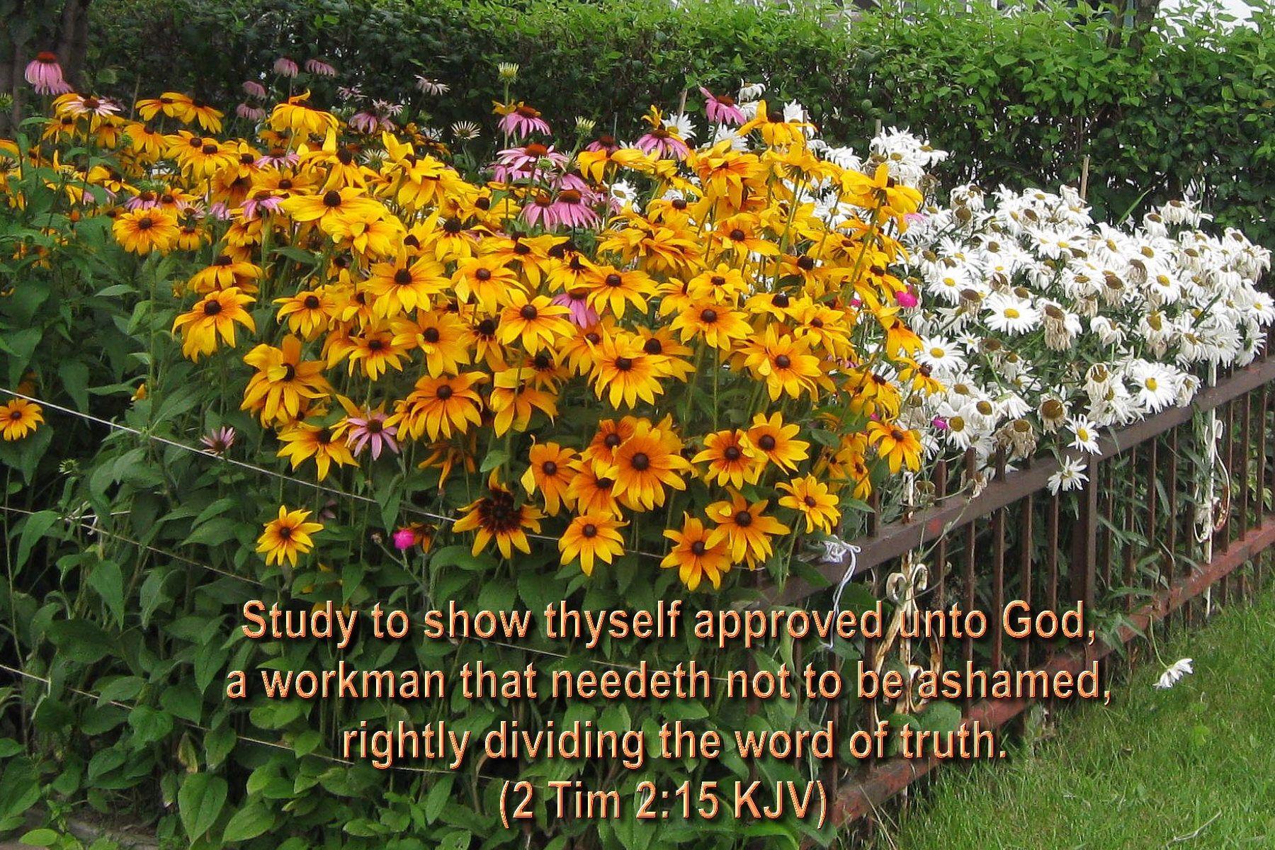 Image from https://drwrl4jesus.files.wordpress.com/2014/08/bible ...