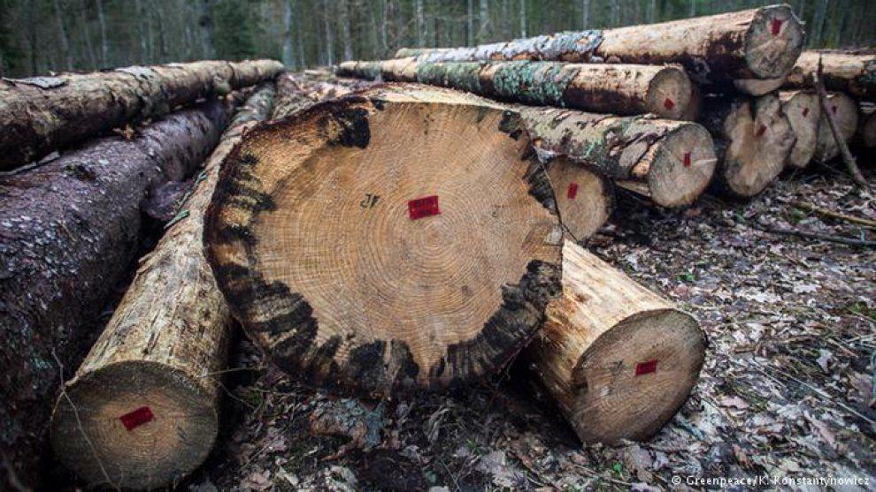 Europa defiende, con retraso, uno de sus bosques más valiosos
