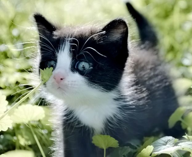 Black and white and cute all over... | ~Cutest Kittens ...