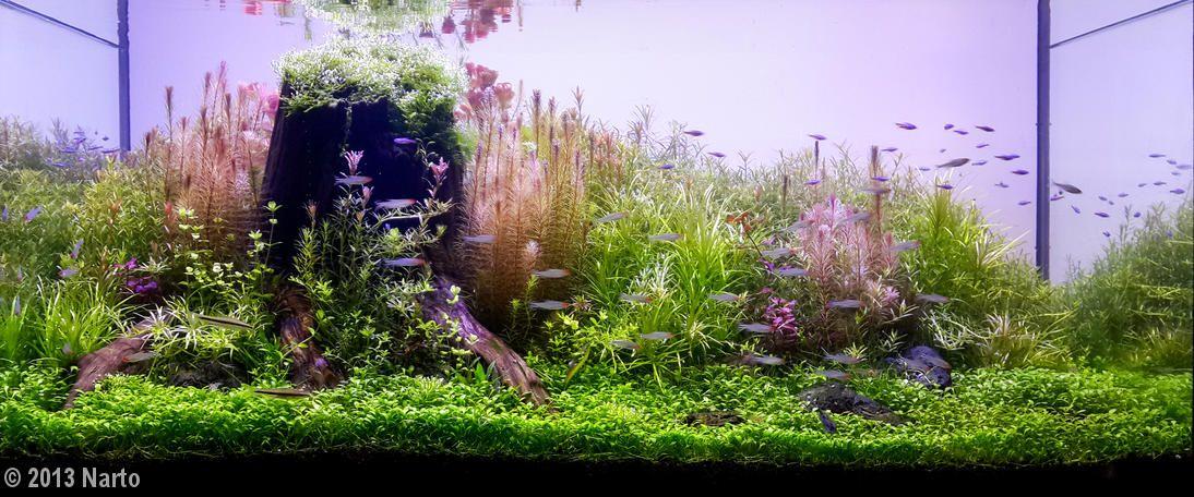 2013 AGA Aquascaping Contest - Entry #218 | Aquascape ...