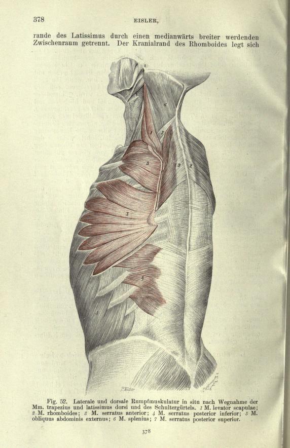 Handbuch der Anatomie des Menschen | Power Human Anatomy I ...