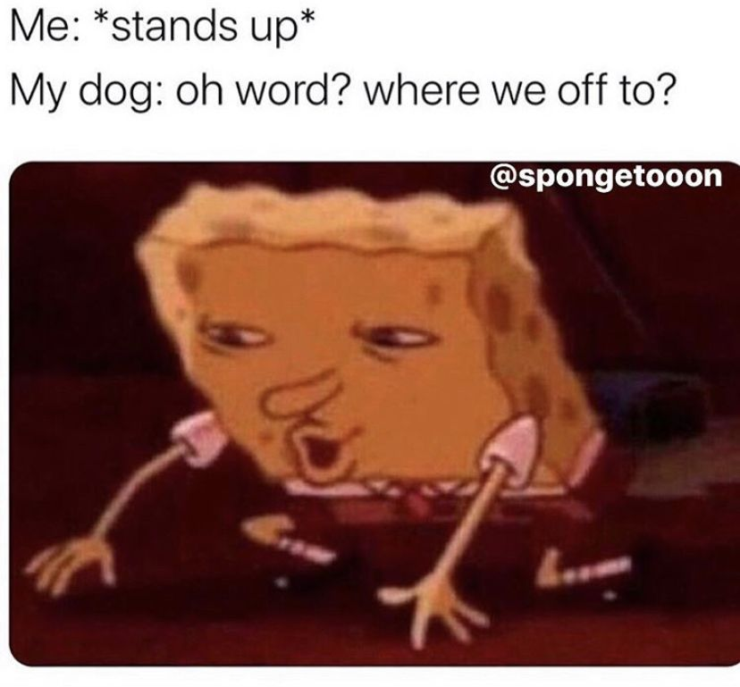 Pin By Anthea Jane On Anything Really Funny Spongebob Memes Stupid Funny Memes Really Funny Memes