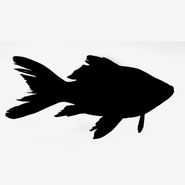 Fish Silhouette Png And Psd Fish Silhouette Silhouette Art Silhouette Clip Art