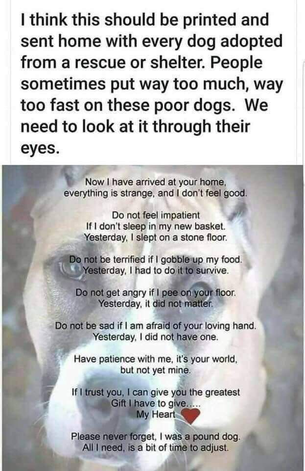 Pin By Ester Koestoro On Vision Rescue Dog Quotes Poor Dog Shelter Dogs