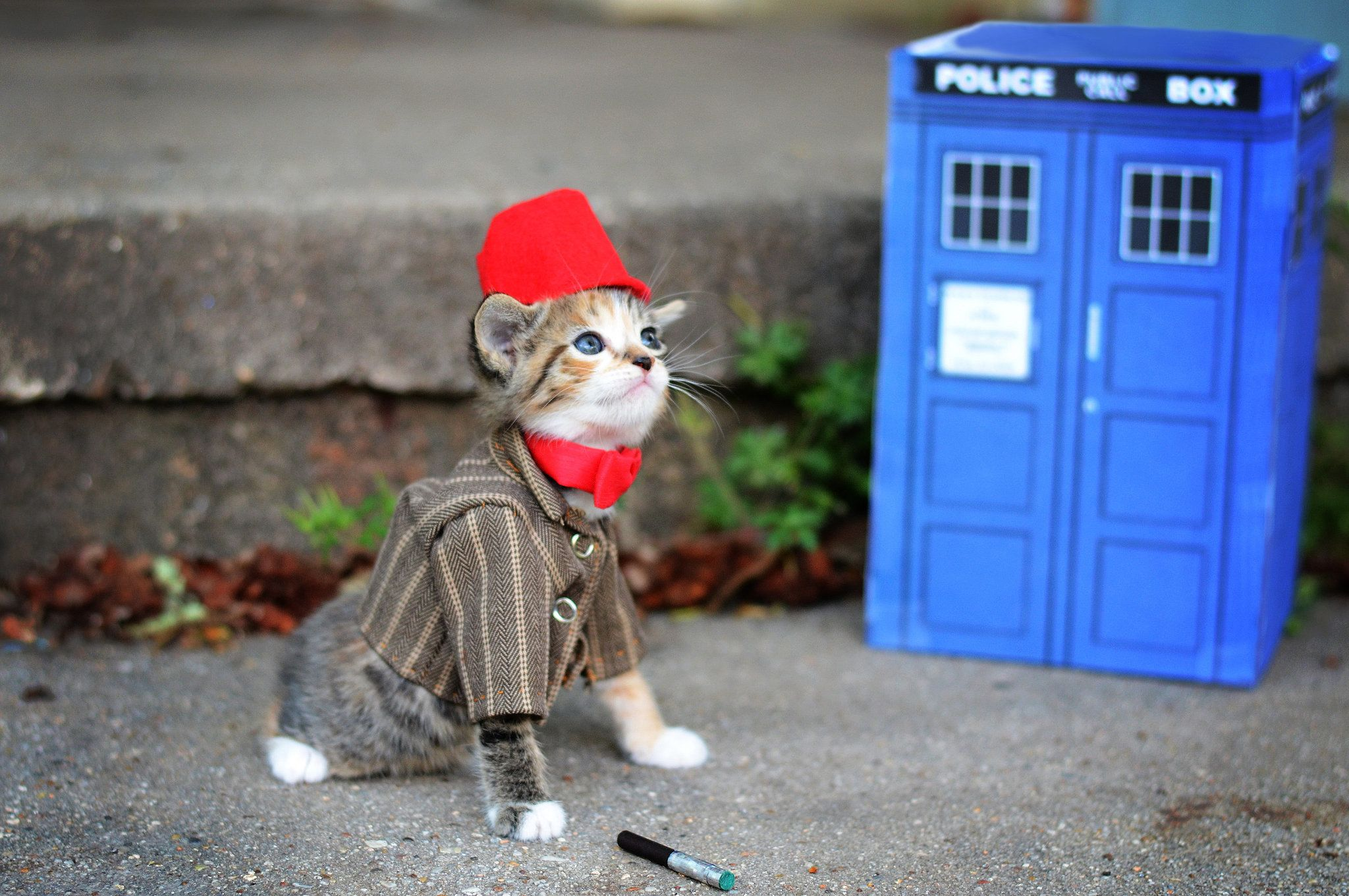 Doctor Who Kittens In Costumes Tiny Kitten Cat Cosplay