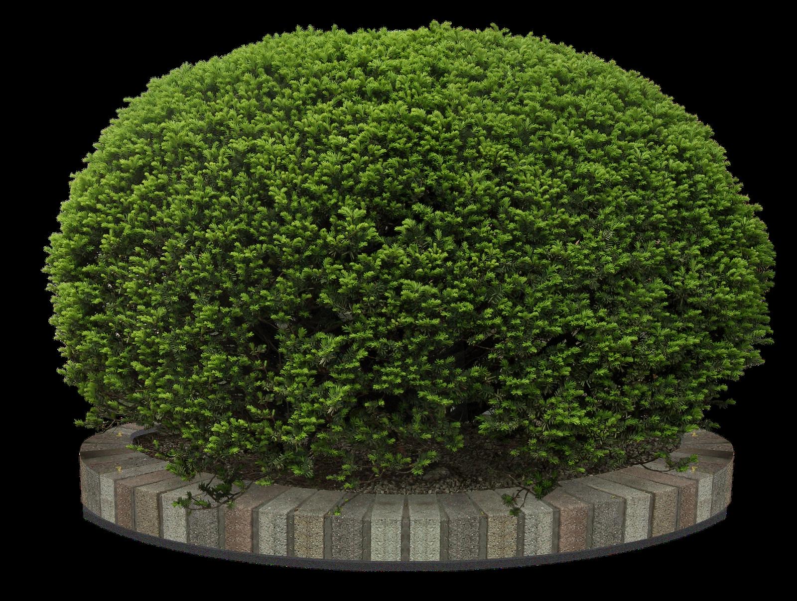 Pin de luna de abril en tubes png pinterest jardines - Arboles jardin ...