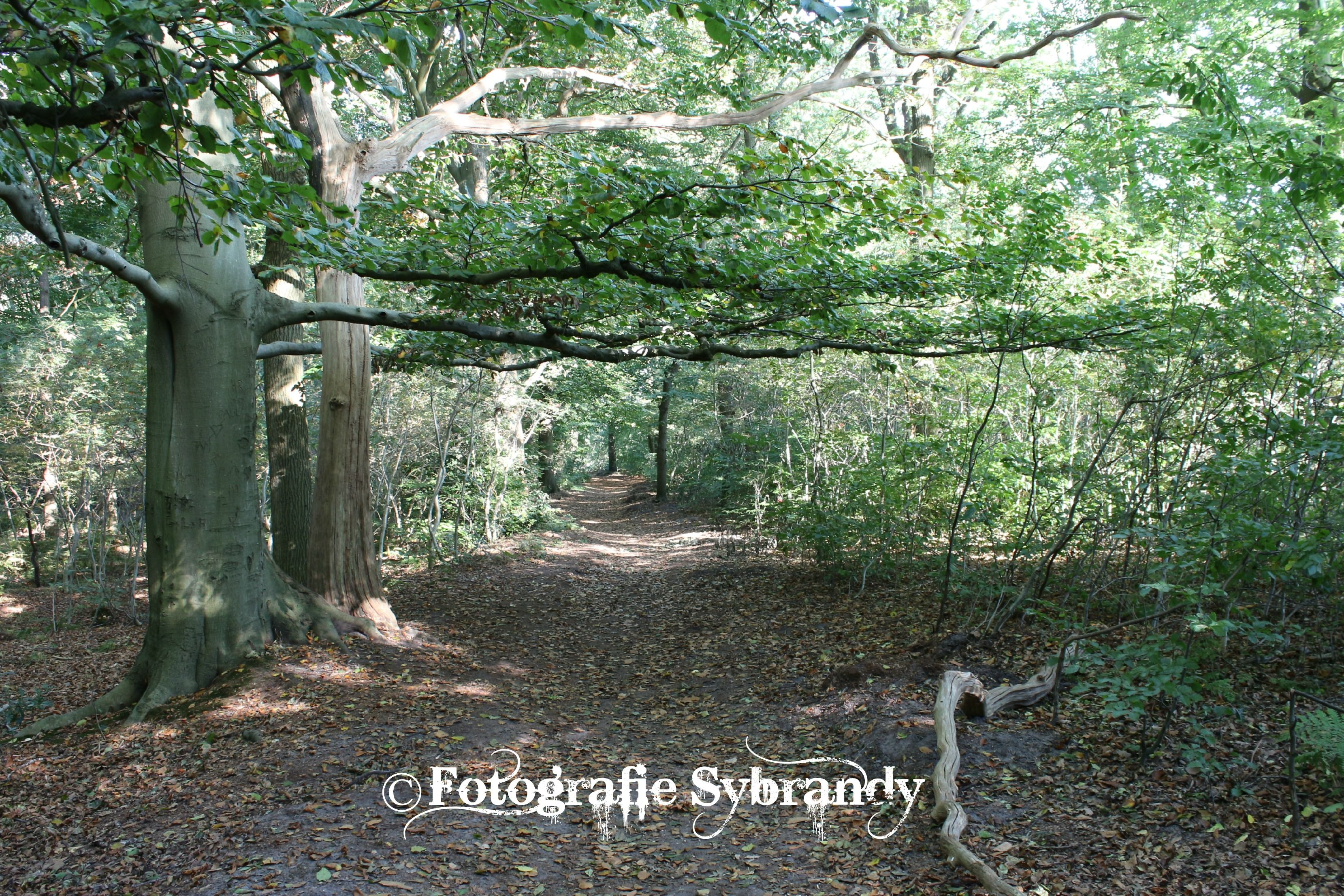 Aan de wandel in het mooie Rijsterbos.