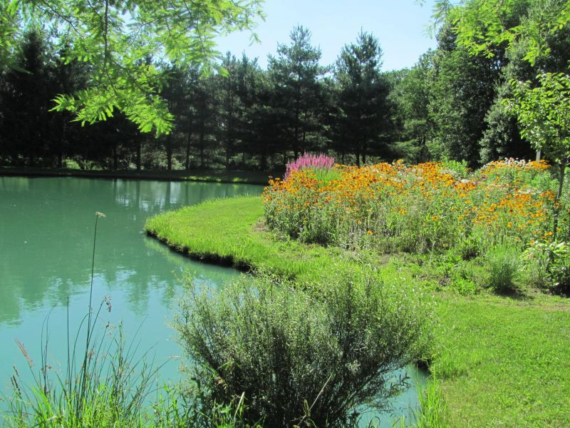 This is a perennial garden next to our 1 2 acre pond it 39 s for Perennial pond plants
