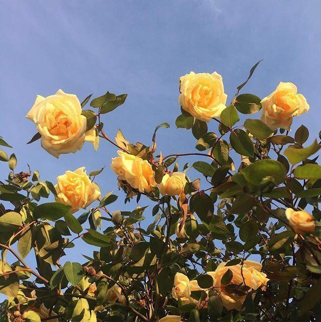 yellow, aesthetic, flowers, field, california, sky, vintage