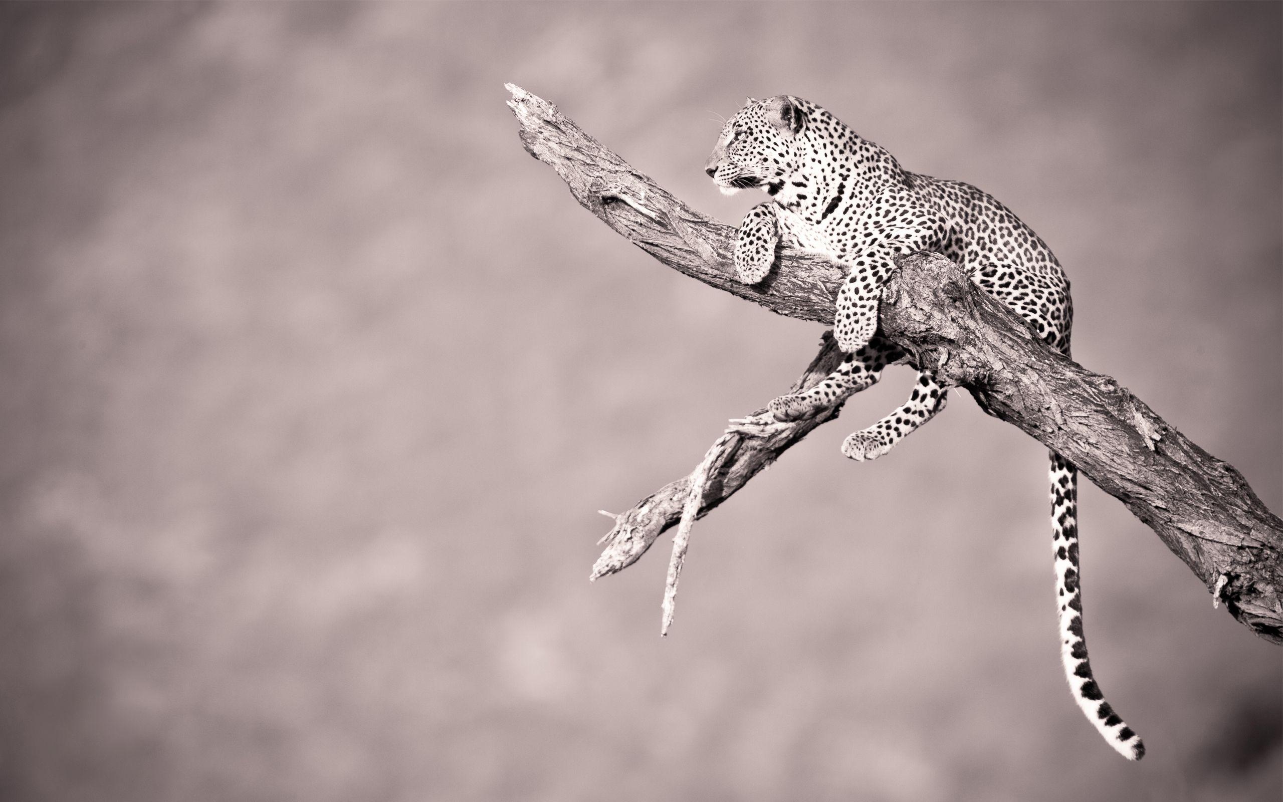 Great Wallpaper Desktop Background Wild Animal - d9026c1ca2b5e700fac67fc994a6eeae  Picture_684232 .jpg
