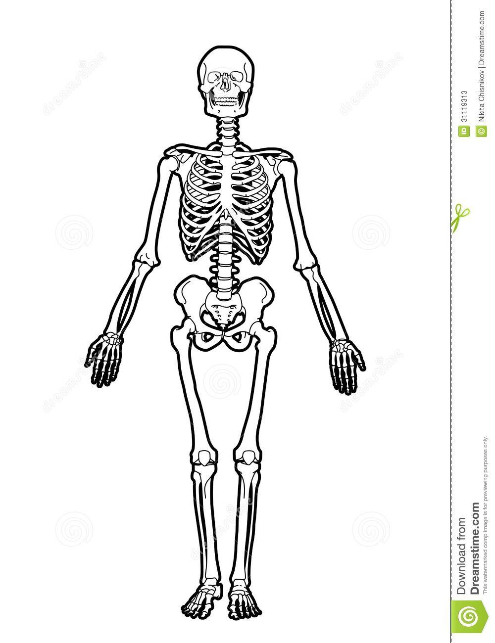 esqueleto-humano-31119313.jpg (1000×1300) | Esqueleto Humano ...