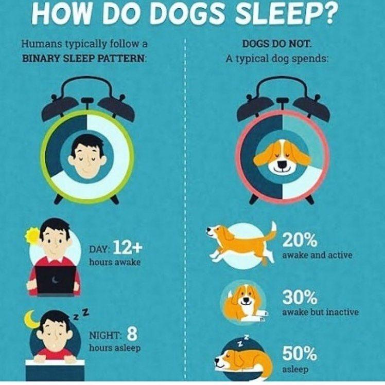 WONDER HOW DO DOGS SLEEPS?  #DOGSLEEP #DOGLIFE #DOGLOVE