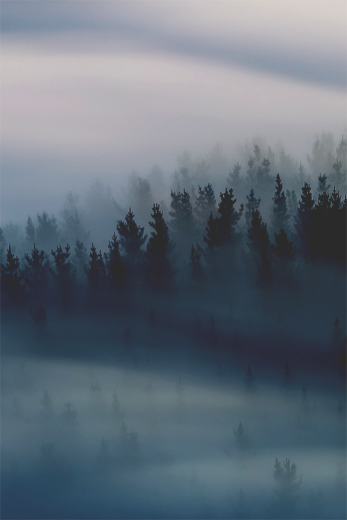 Foggy forest trees phone iphone wallpaper wallpapers in - Pine tree wallpaper iphone ...