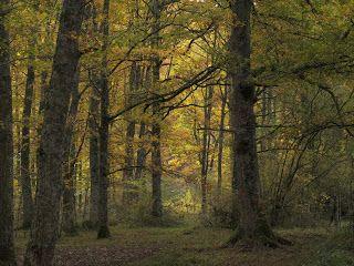 14 Ideas De Robledal Y Bosque Mixto De Frondosas Tipos De Bosques Abedules Bosque