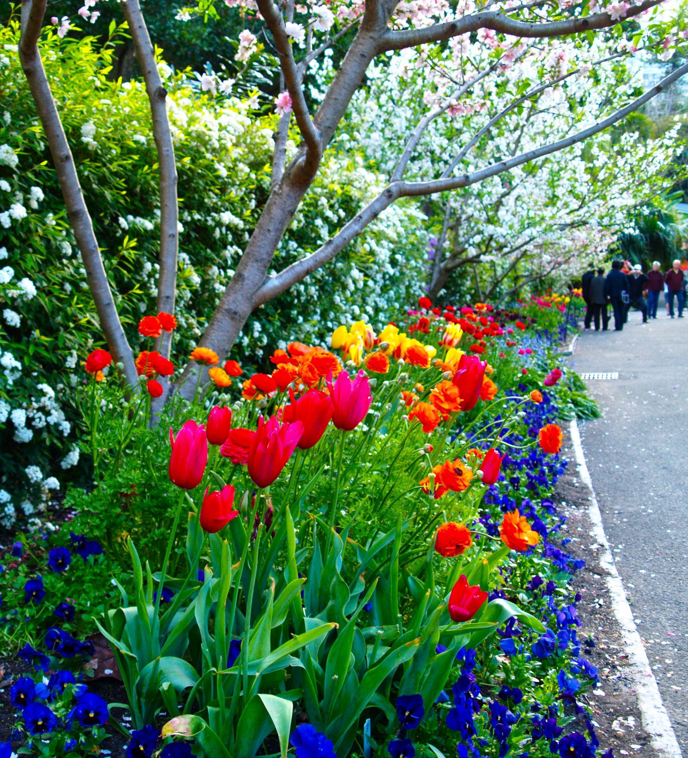 57 Amazing Beautiful Garden Ideas Inspiration And: Spring-walk-macquarie-wall-royal-botanic-gardens-Sydney
