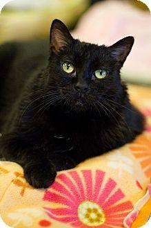 Loofah Cat Adoption Kitten Adoption Cats And Kittens