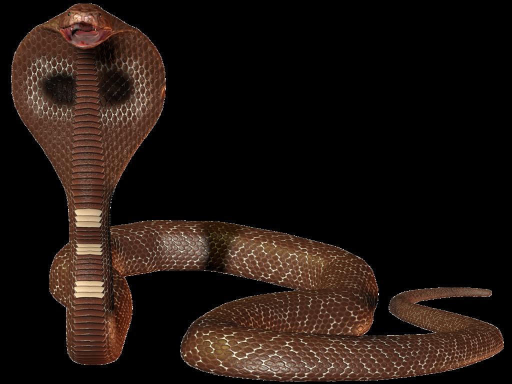3d Snake 1 2 By Cyborgerotica Deviantart Com On Deviantart Snake Drawing Snake Deviantart