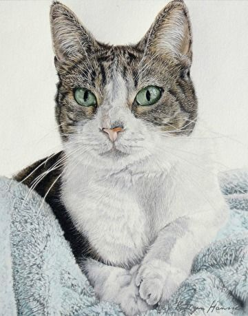 Sienna by Kathryn Hansen Colored Pencil 10 x 8 Color