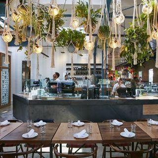 Rose Cafe Restaurant Cafe Plants Bar Restaurant Interior Cafe Restaurant