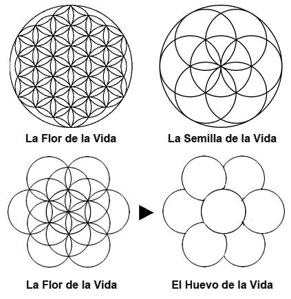 La Flor De La Vida Origen Humano Inspireyoga Sacred Geometry