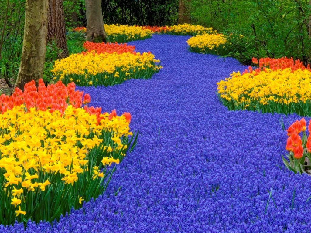 Most beautiful flower garden in the world - World Love Flowers Love Flowers Beautiful Flowers Most Beautiful Gardens