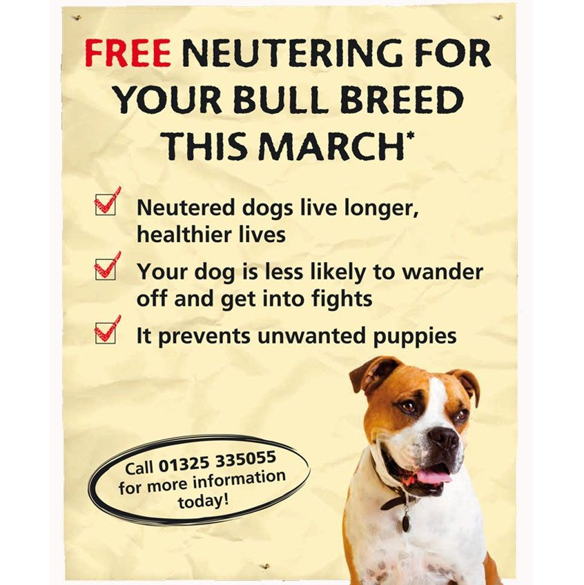 79cbd55eaf0 FREE Dog Neutering For Your Bull Breed - Gratisfaction UK Freebies #pets  #bulldogs #freestuff #freebies