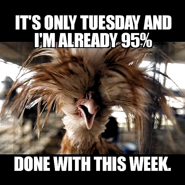 Tuesday humor & dienstag humor & humour mardi & martes humor & humor memes, humor funny, parenting humor