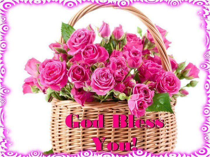 God bless you   Pink rose pictures, Beautiful pink roses, Pink roses