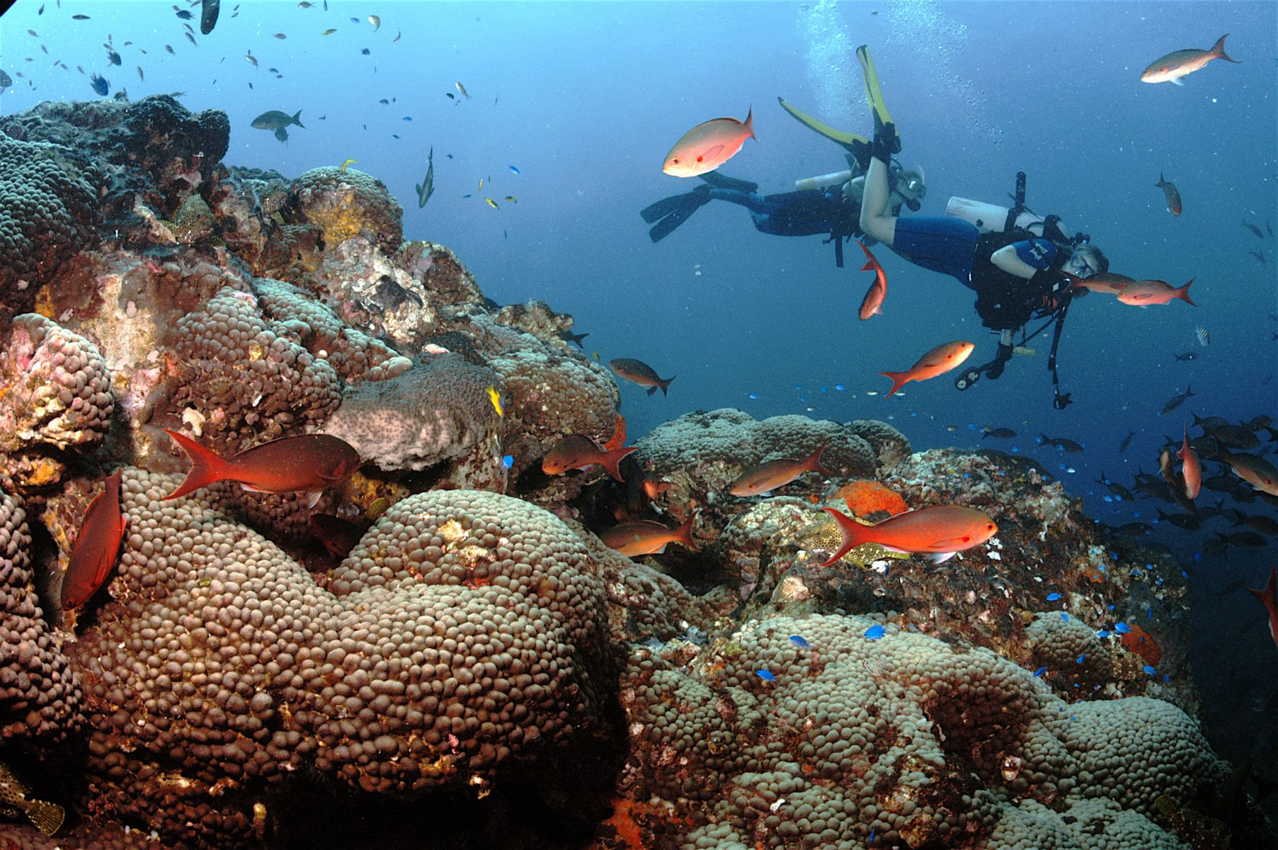 Scuba Dive The Flower Garden Banks National Marine Sanctuary Located 70 To 115 Miles Off The