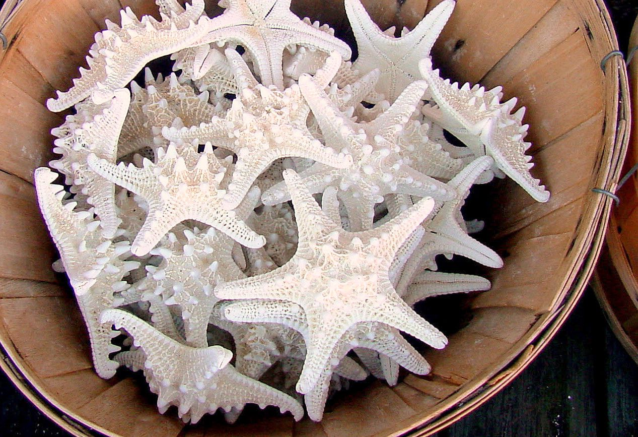 Starfish for sale in Fernandina Beach, FL (With images ...