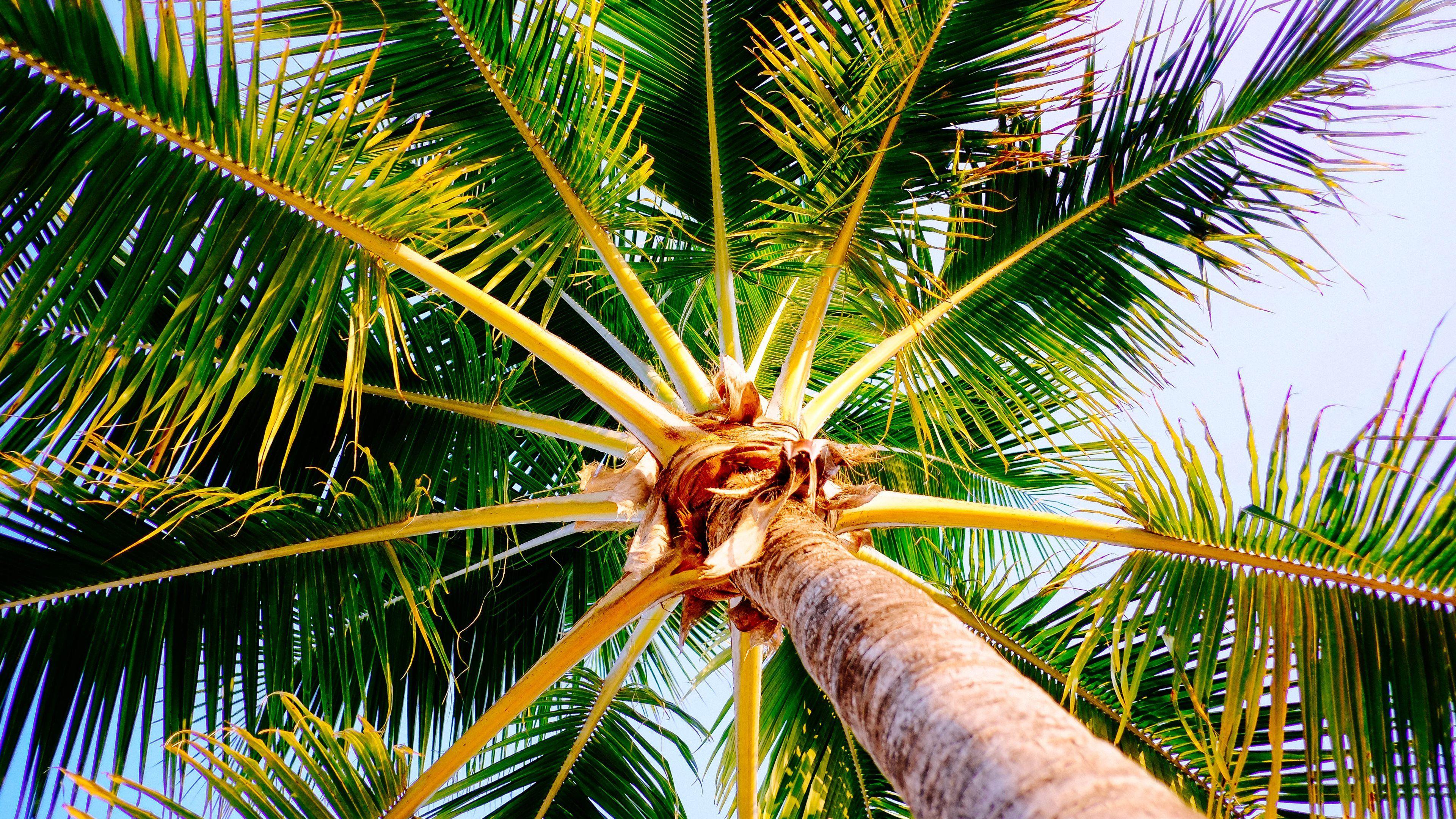 Tropical Nature In Jamaica Wallpaper Hd Wallpapers Palm Trees Wallpaper Tree Hd Wallpaper Tree Wallpaper