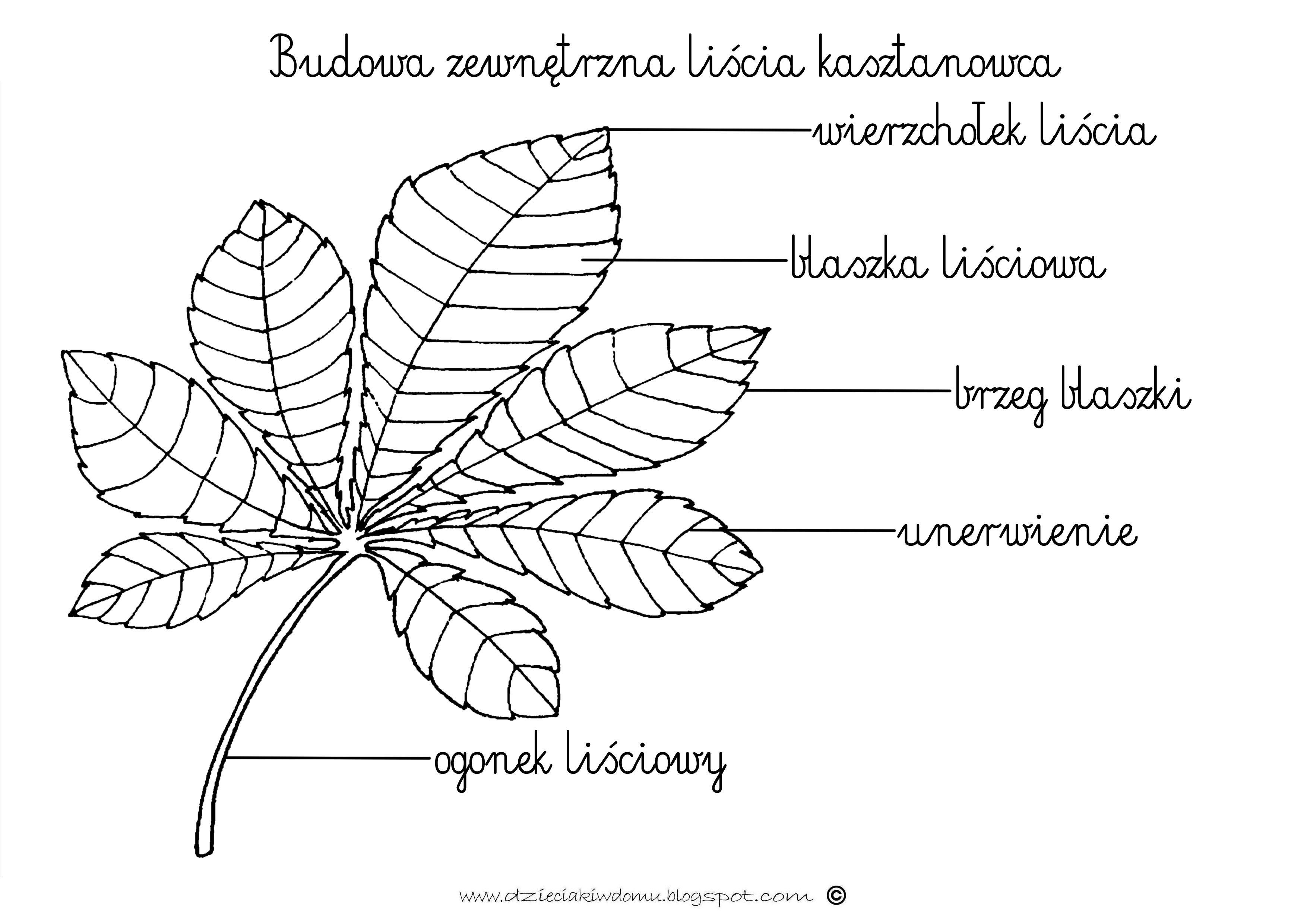 Budowa Liscia Kasztanowca Www Dzieciakiwdomu Blogspot Com Educational Crafts Worksheets For Kids Education