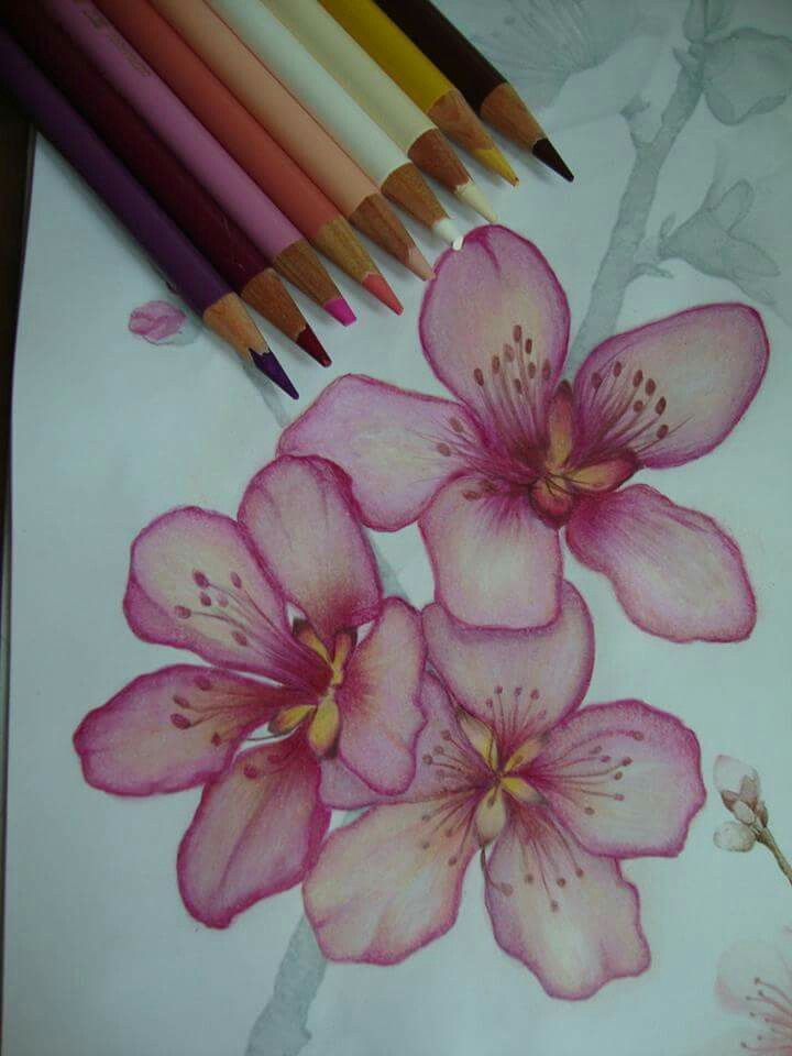 Follow Me For More Poppin Pins Uel Ibekwe Flower Drawing