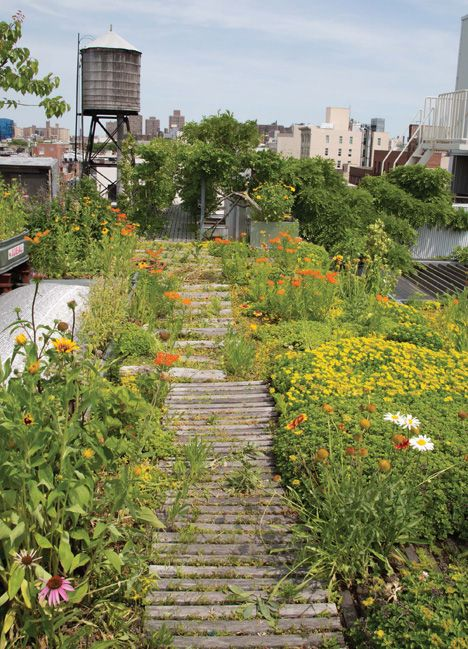 The How To S Of Rooftop Farming In The Rooftop Growing Guide How To Transform Your Roof Into A Garden Or Farm Greenroofs Com Rooftop Garden Roof Garden Design Urban Garden