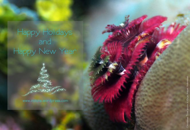 Christmas Tree Worm Photography Pinterest Christmas tree and
