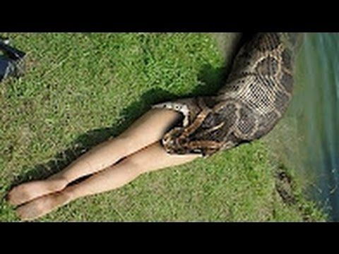 Biggest Snake Caught - Biggest Snake in the World Attack on Human #06